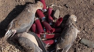 Dove Hunting - How to Field Dress Doves