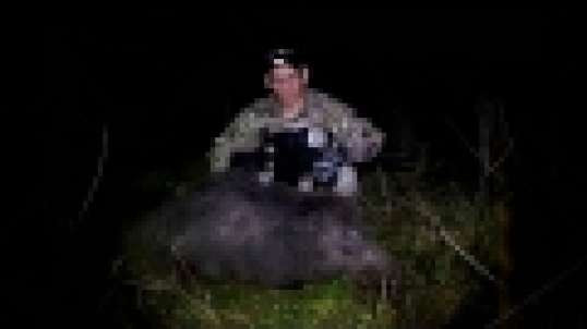 Thermal Hog 300 AAC Pulsar Apex XD75 Quantum XD50S Video 1st Night Texas Hog #2
