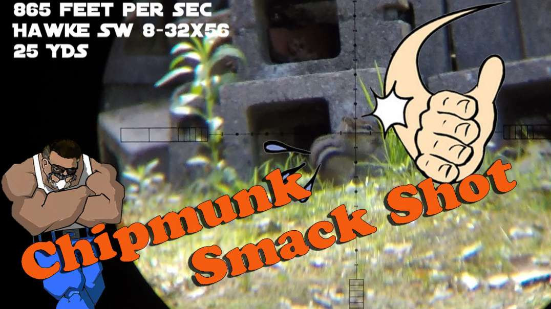 Chipmunk Smack Shot #1