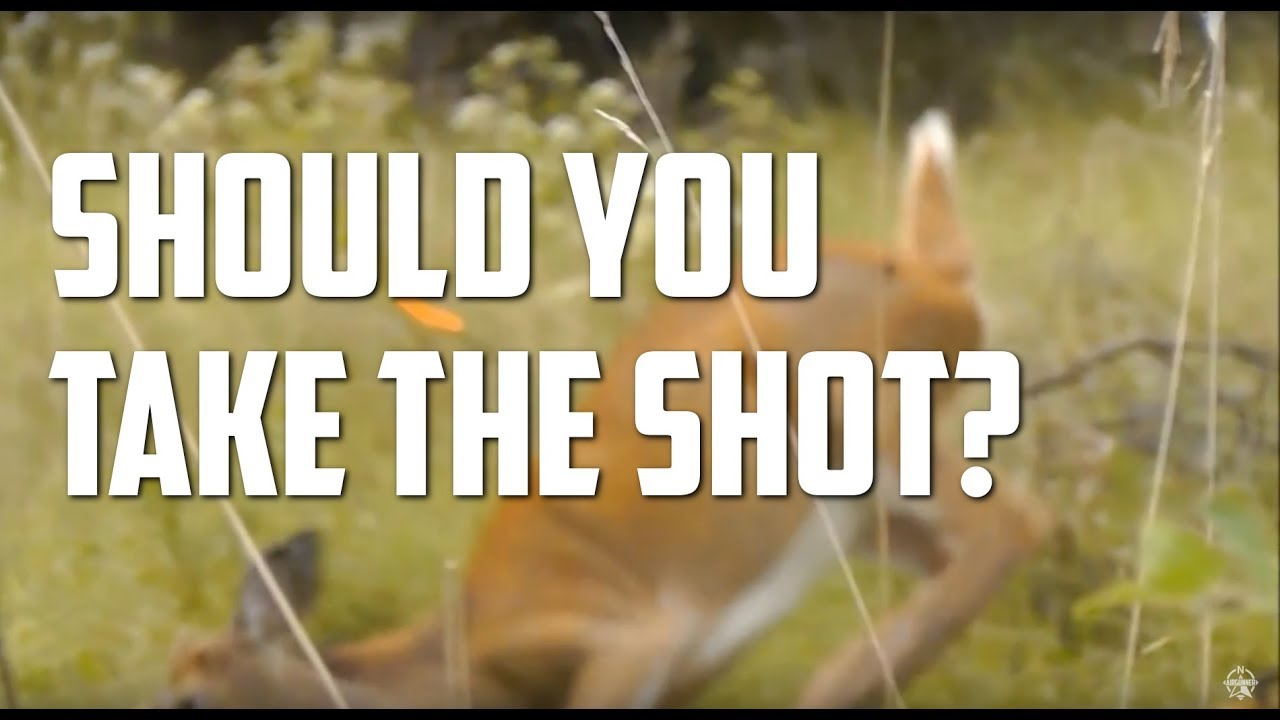 AirForce Texan: Ethical Deer Hunting Shot Distance with Big Bore Air Rifles?