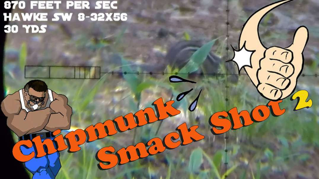 Chipmunk Smack Shot #2