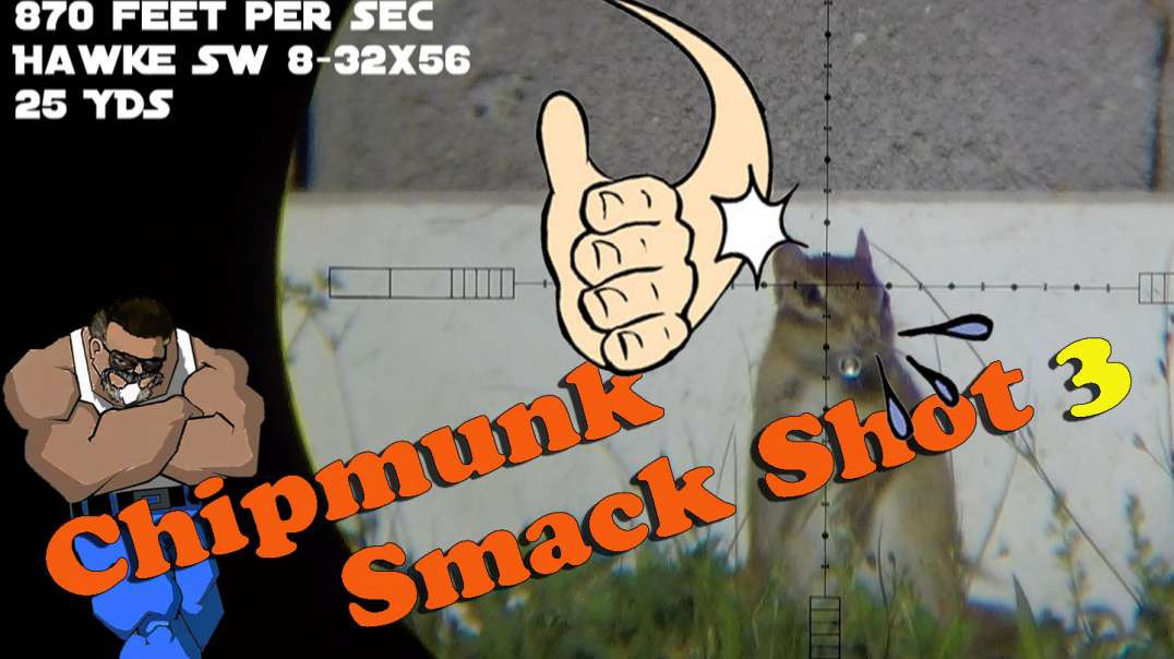 Chipmunk Smack Shot #3