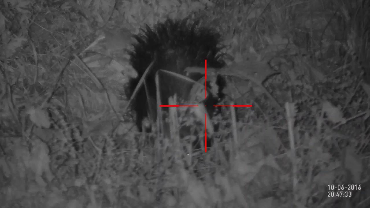 Porcupine hunting videos | ATN X-Sight II HD 3-14x Day/Night Rifle scope