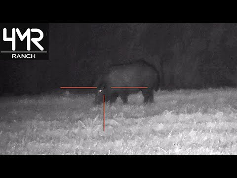SILENCED Night Vision Hog Hunt