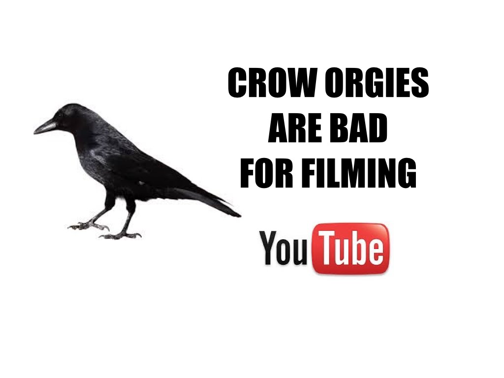 Crow Orgies Are Bad For Filming Youtube Videos
