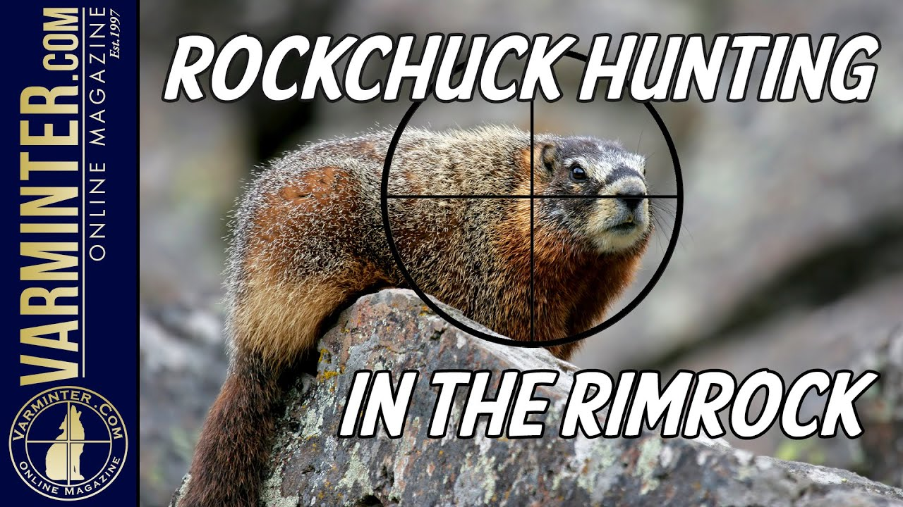 Rockchuck Hunting in the Rimrock