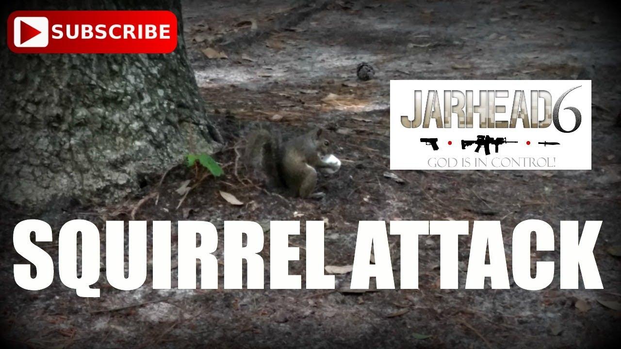 Squirrel Attack!