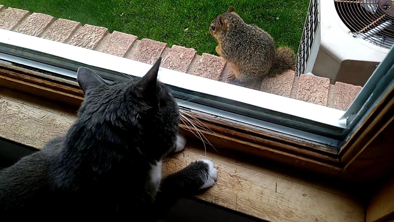Ammo Cat makes a friend.
