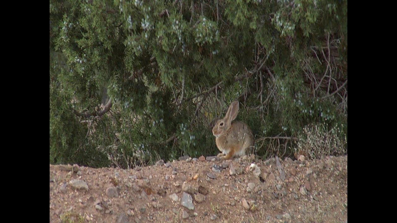 Gun Bunny Blooper #246