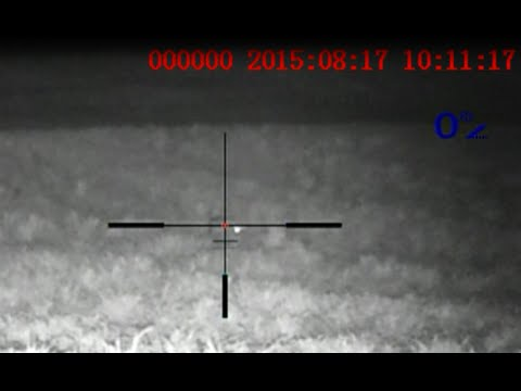 Coyote Hunting Pulsar Night Vision Digisight N850 LRF Quantum HD50S Hard Fought Female Coyote