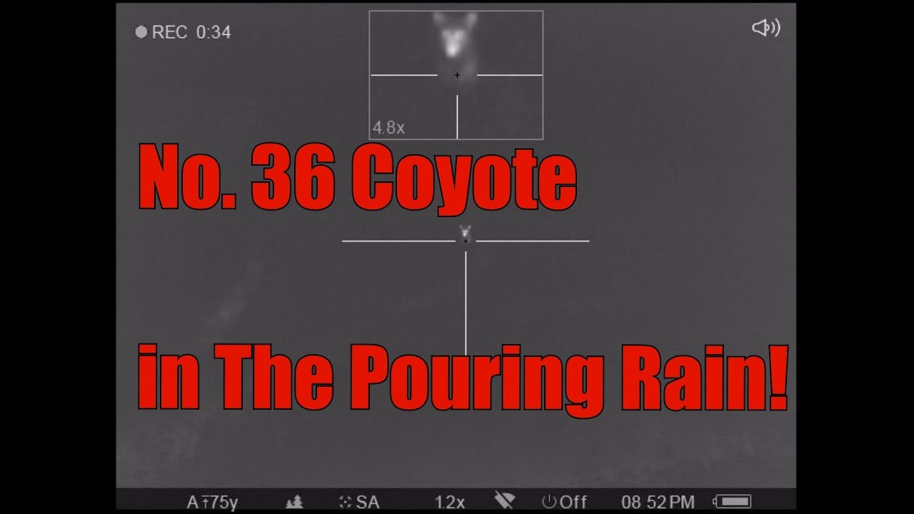 No  36 Coyote in the Pouring Rain Lehigh Defense 300BLK 120gr Wicked Bullet  Pulsar Trail XP38