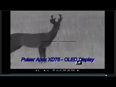 Pulsar Apex XD75 Raccoon and A Buck