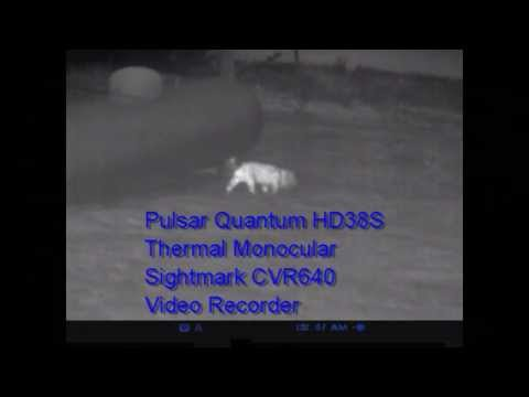 Pulsar Digital Night Vision Quantum HD38S Thermal Monocular Tracking Wounded Animals by Nito Mortera