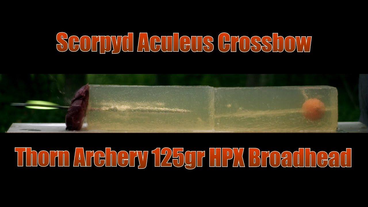Scorpyd Crossbow Aculeus  Thorn Archery 125gr HPX Broadhead Ballistic Gel Shot