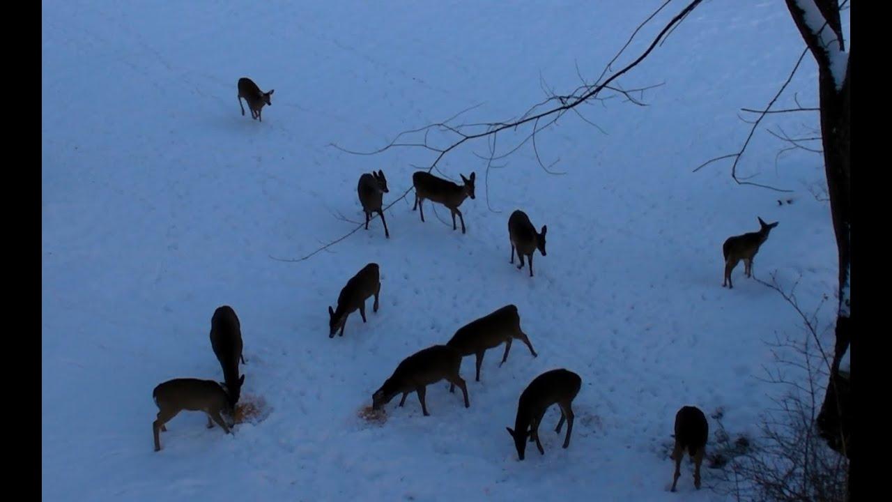 Ohio Bow Urban Deer 2012 Part I