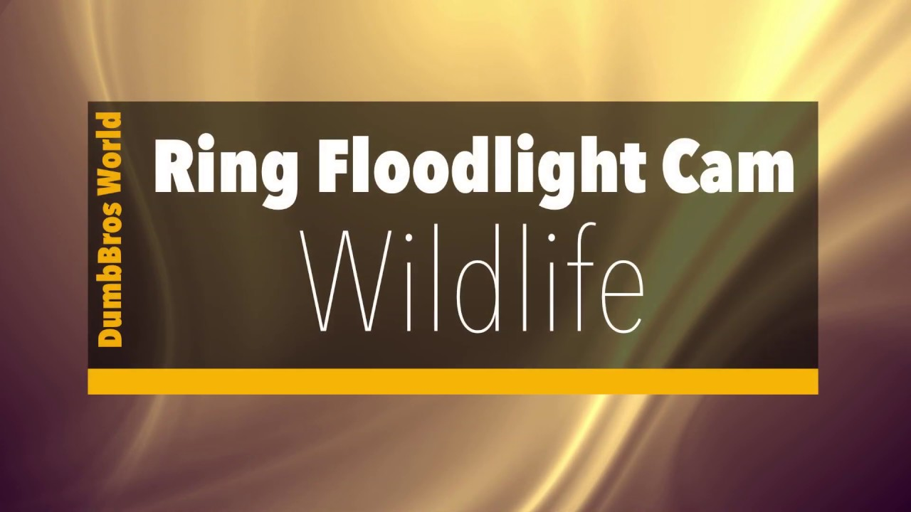 Ring Floodlight Cam Wildlife