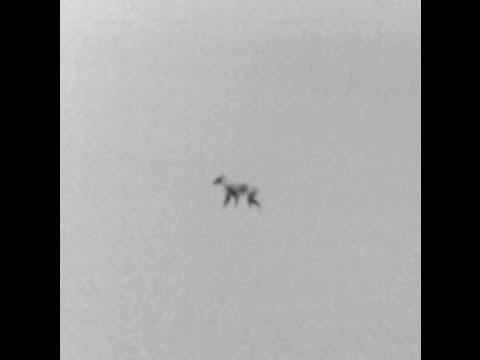 2015 Ohio Night Coyote Thermal Pulsar Night Vision