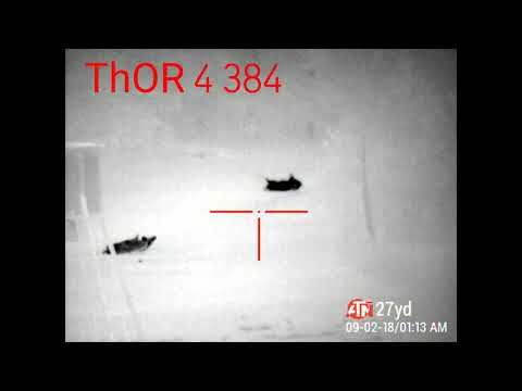 The Best Thermal ATN ThOR 4 Action on YouTube!