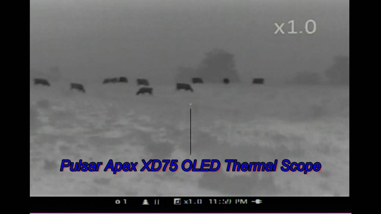 Pulsar Thermal Apex XD75 OLED Thermal Nights