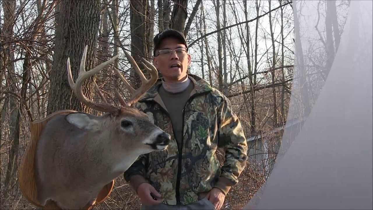 My Dear Deer Story The Release Buck