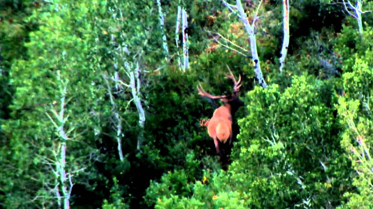 2012 Scouting for Elk on the Wasatch Limited Entry Elk Unit -Trip 2