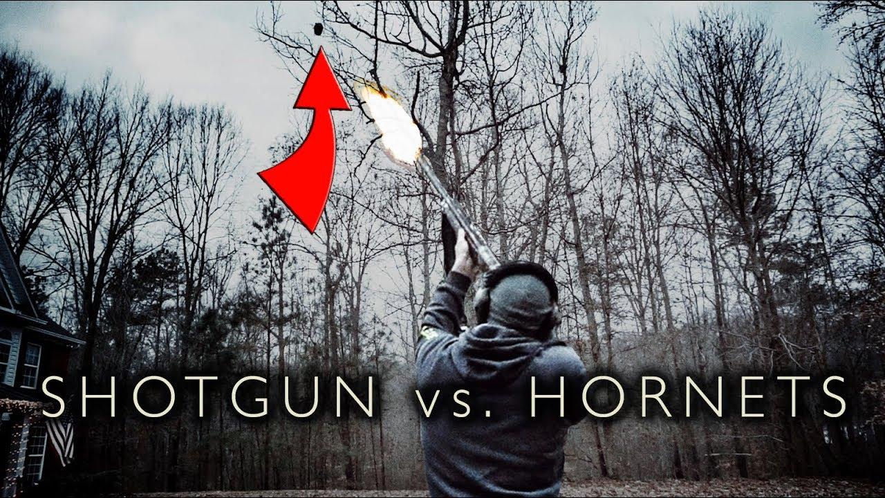 Shotgun vs. Hornet Nest