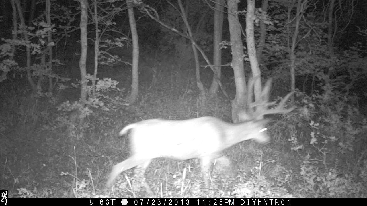 Mule Deer on Browning Recon Force and Spec Ops Trail Camera