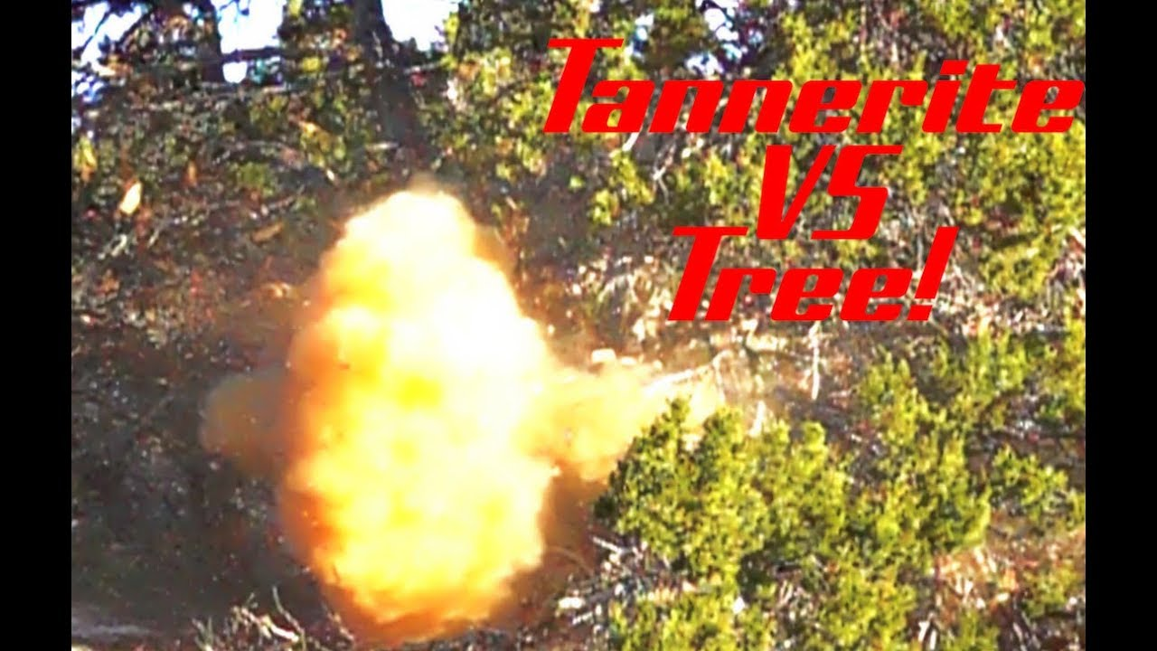 Tannerite VS Tree! - The Why Not Guys