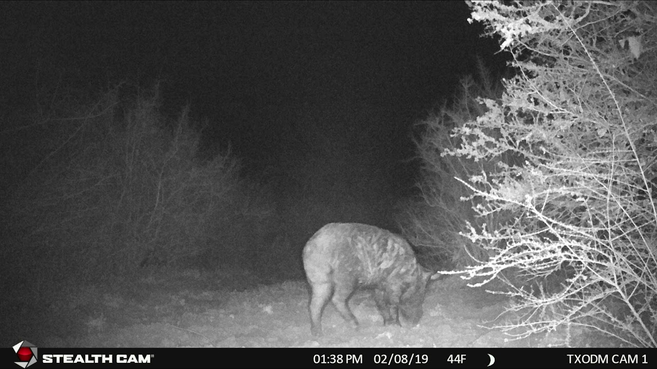 Game Camera Scouting 2/3/19 - 2/17/19 (Stealth Cam DS4K)