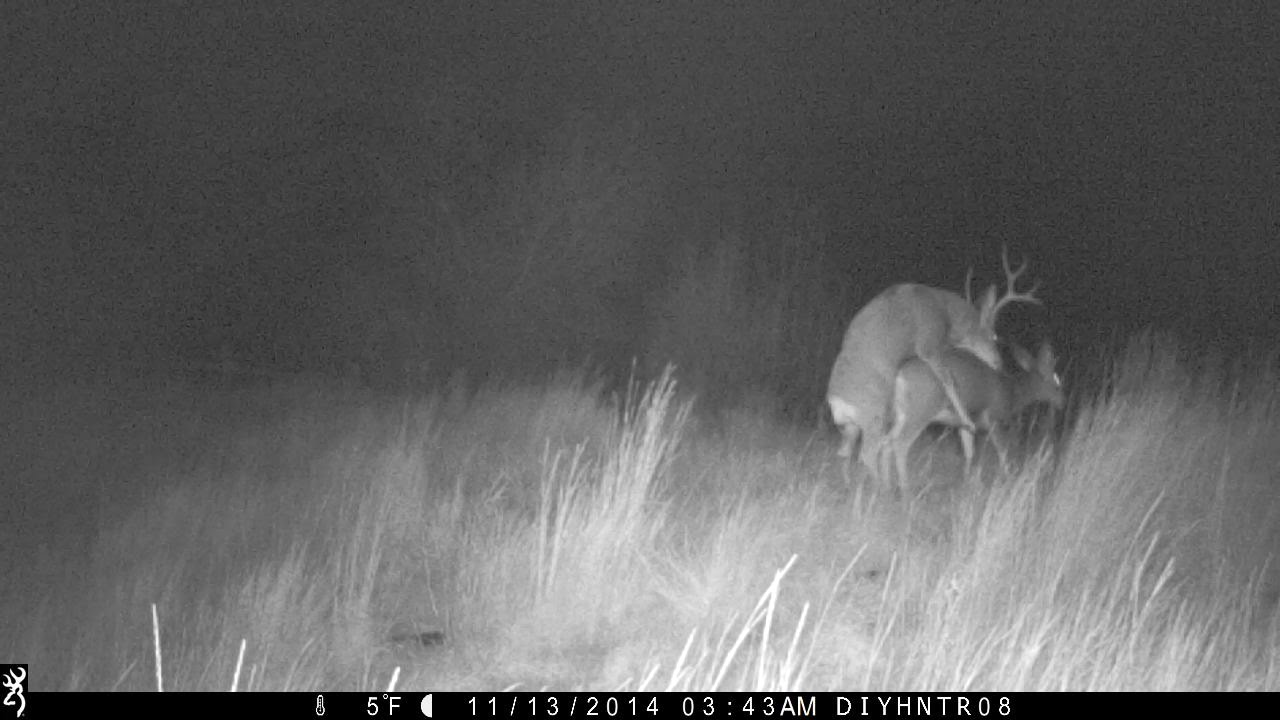 After Dark Mule Deer Promiscuity Trail Camera Action