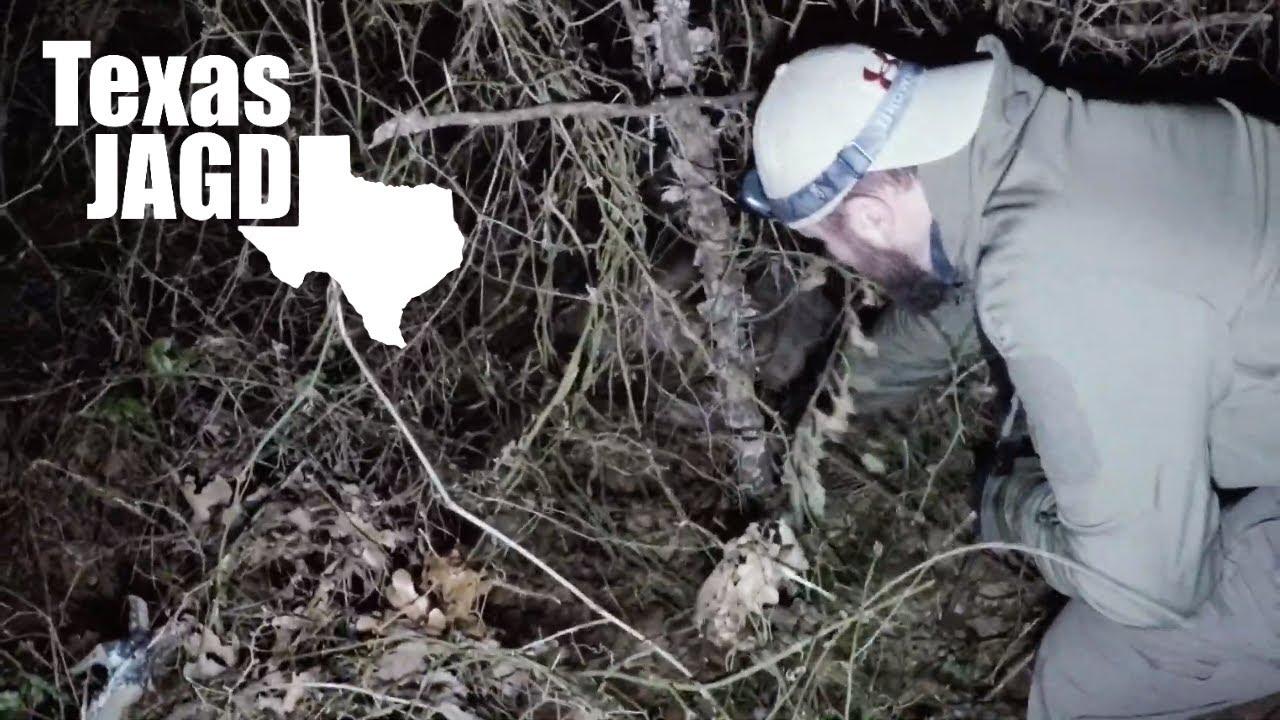 Wild Hog Nest - Breeder hog eliminated