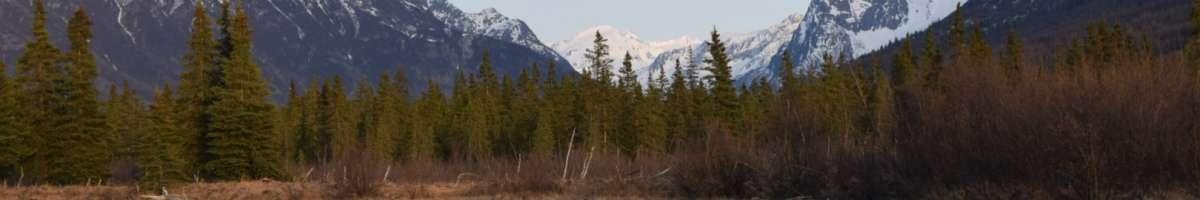 Alaskan Ballistics
