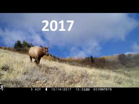 Unicorn Elk 2017 vs 2018