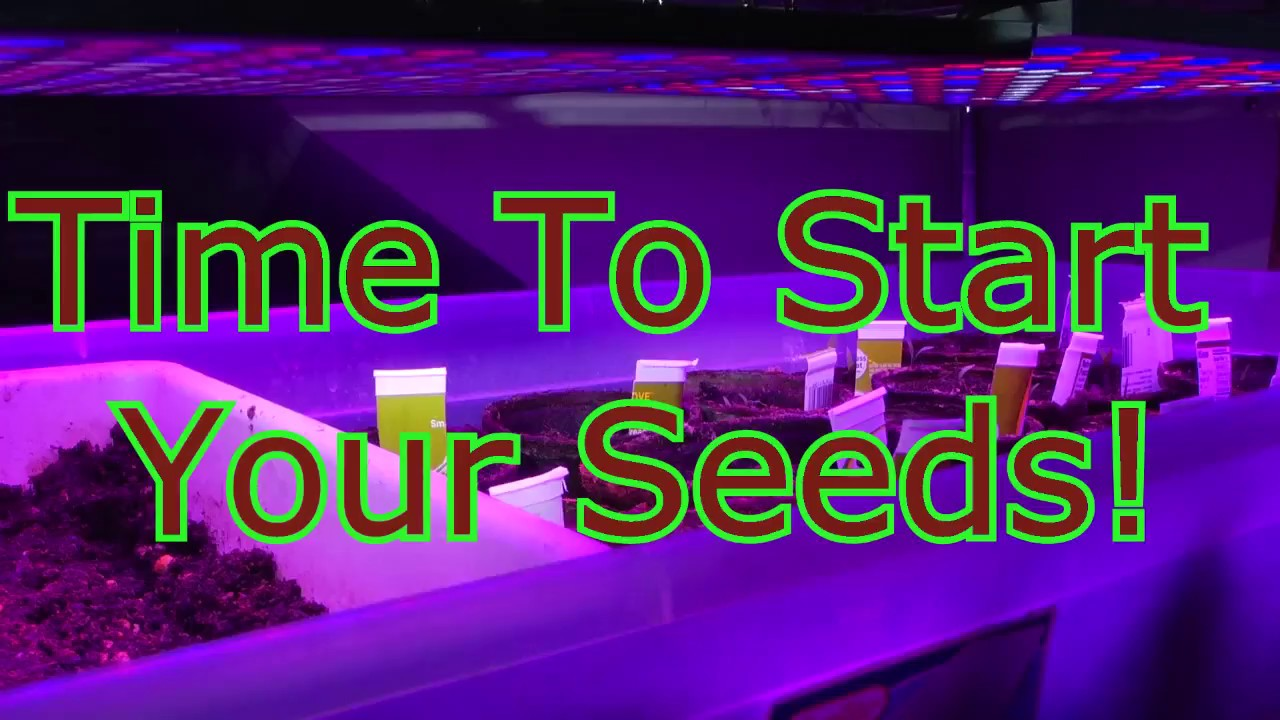 Time To Start Your Seeds!