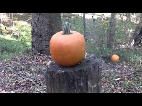 Pumpkin Killing Methods VI
