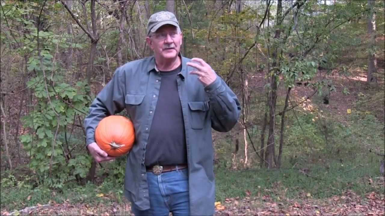Pumpkin Killing Methods IV