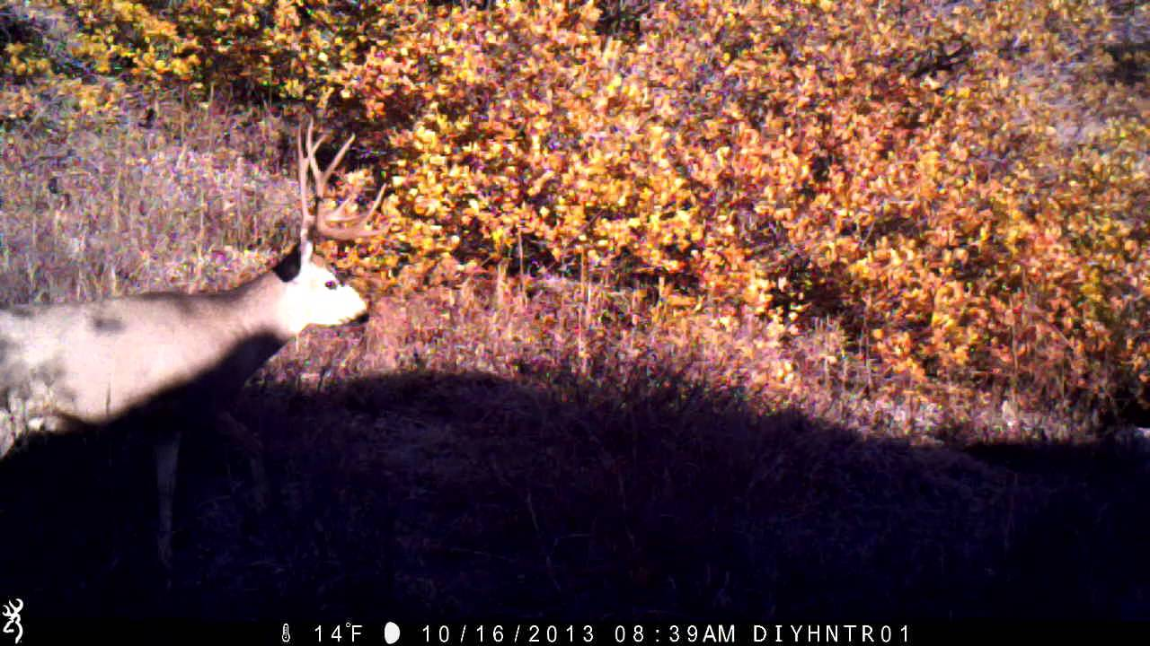 Mule Deer With Cheater - Browning Recon Force Trail Camera