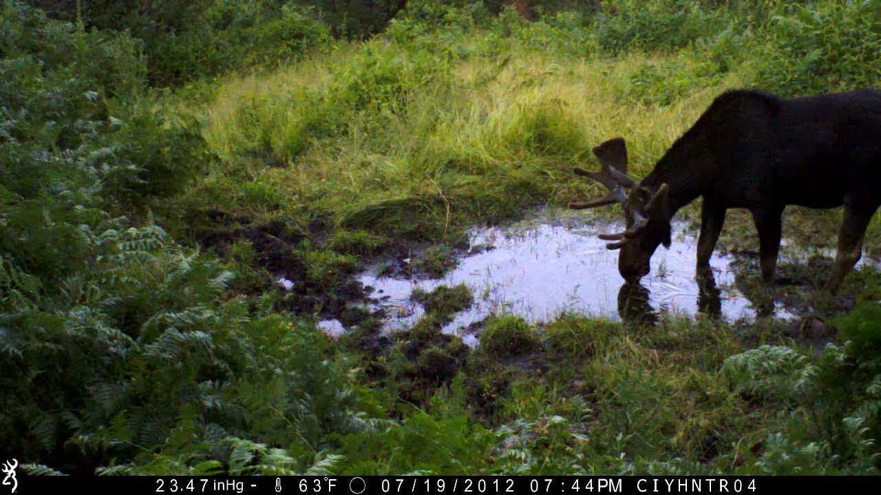 Scouting for Elk in 2013 With Browning Recon Force, Spec Ops and Range Ops Trail Cams