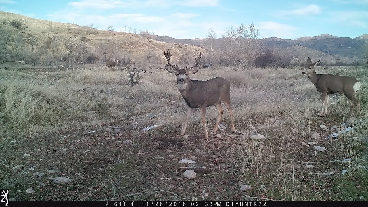 Posing For the Trail Camera