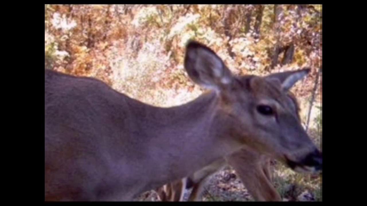 Putting you up close to wildlife.