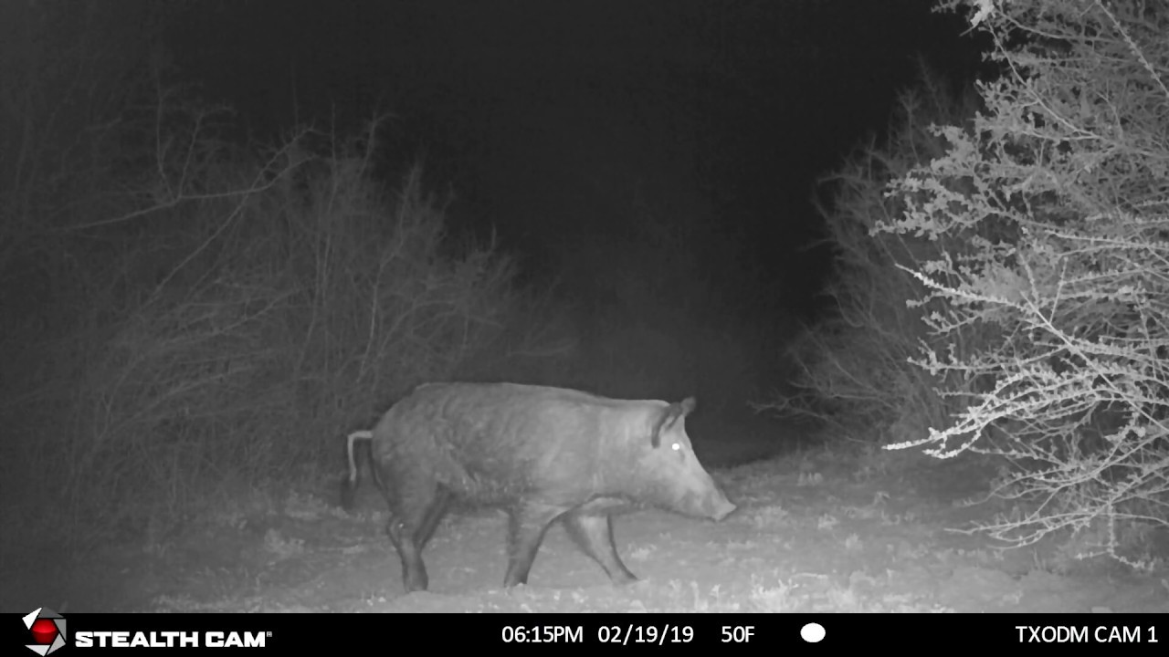 Game Camera Scouting 2/18/19 - 2/26/19 (Stealth Cam DS4K)