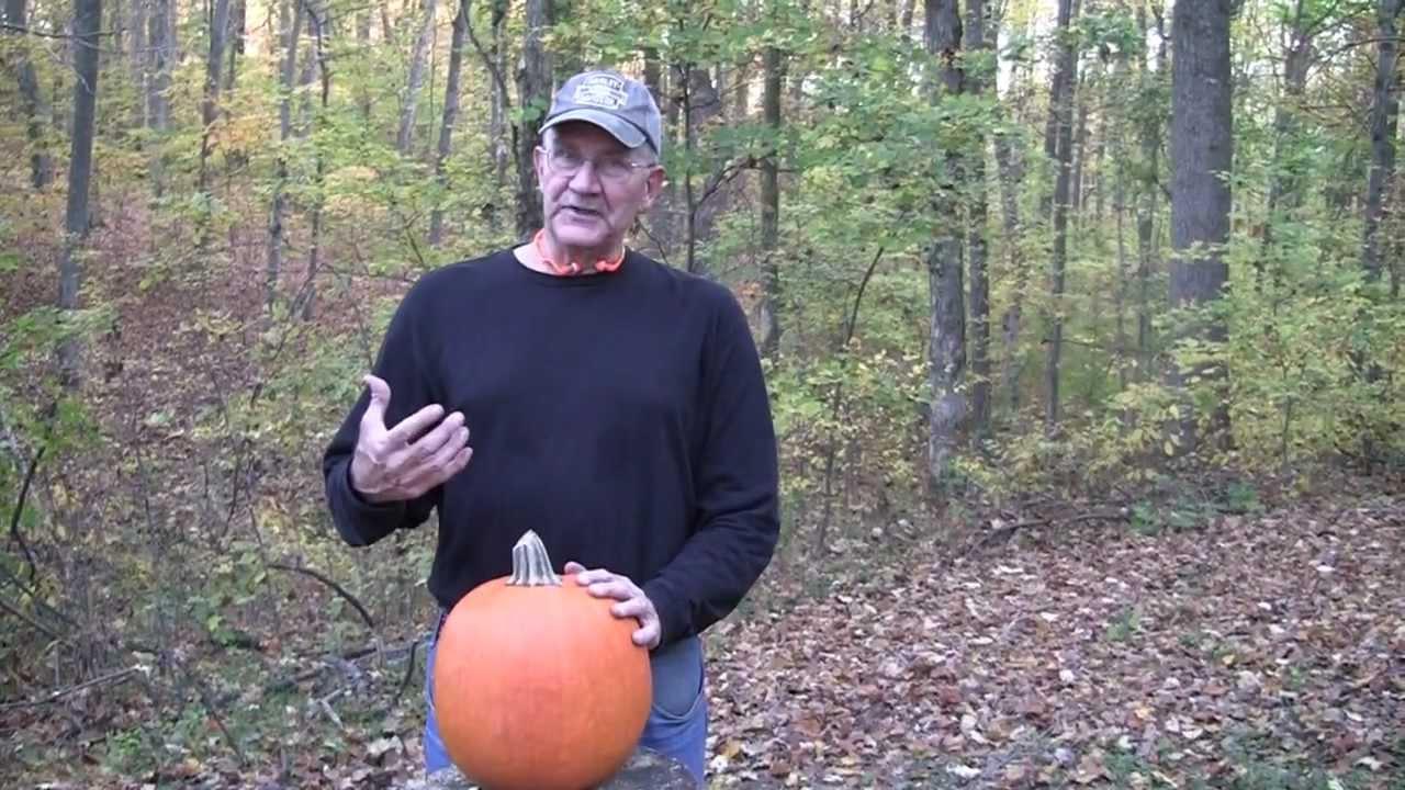 Pumpkin Killing Methods III