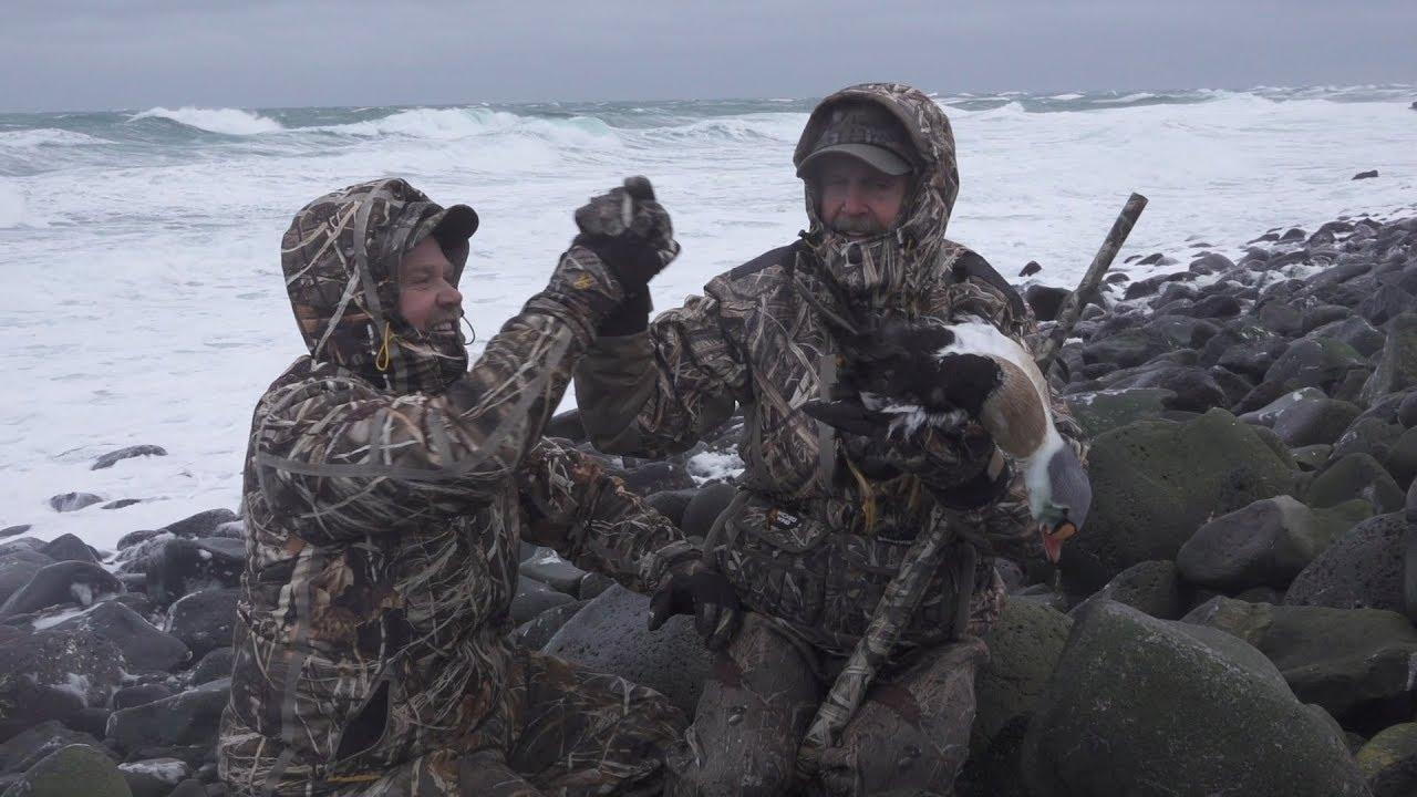 King Eiders in the Harsh Environment of Alaska's St. Paul Island
