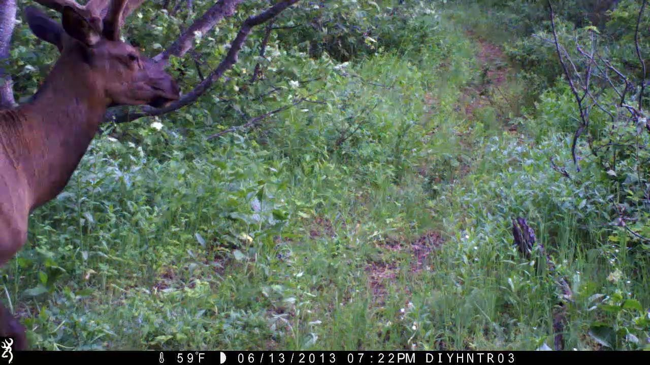 Browning Recon Force Trail Cam HD Video - Elk, Moose, Mule Deer