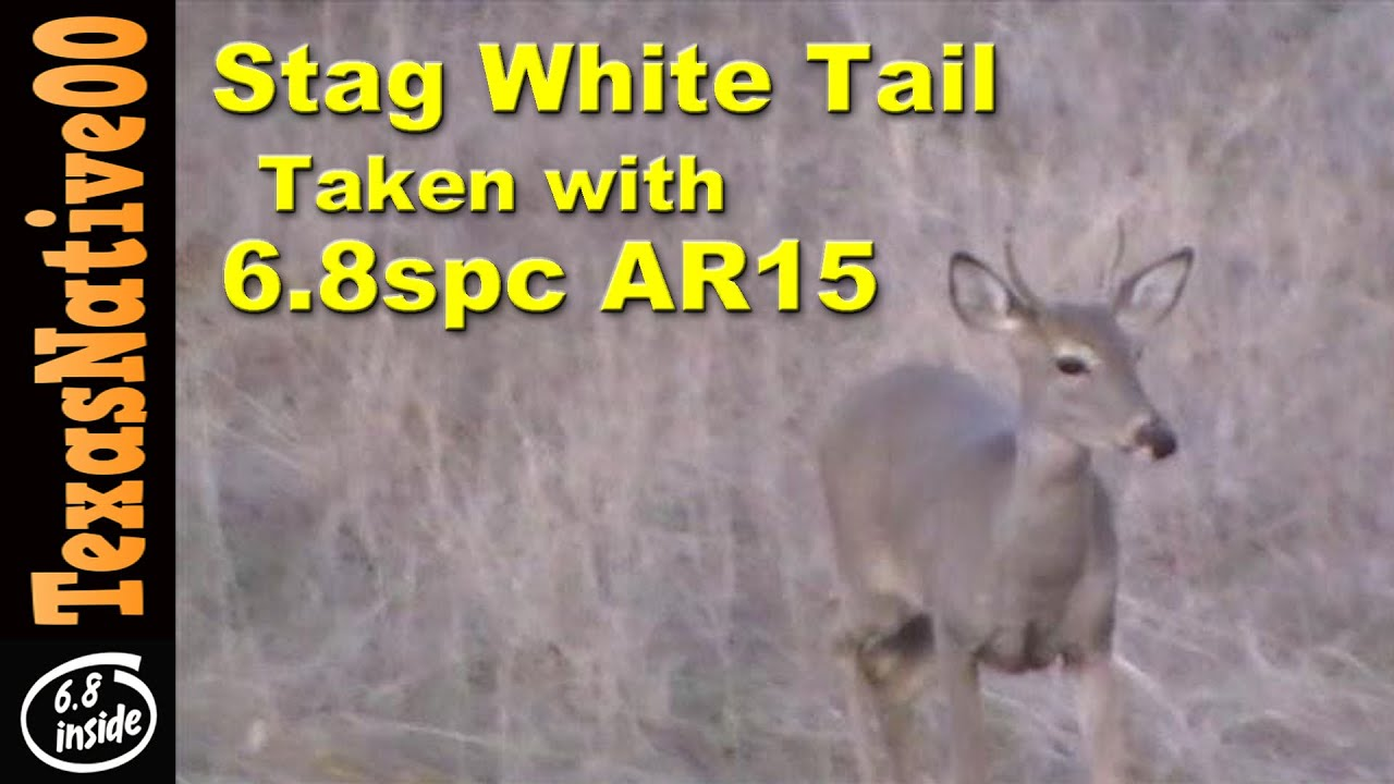Stag White Tail Spike Taken with the 6.8 SPC II Rifle