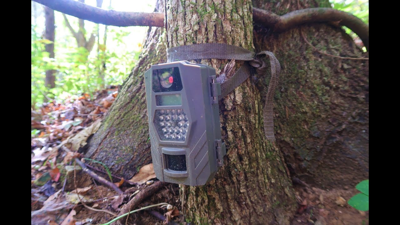 Checking Trail Cameras - NOT GOOD