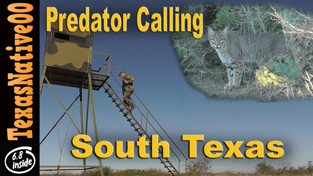 Hunting Predators in South Texas (Coyotes & Bobcats)