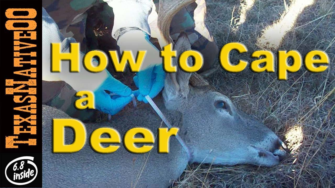 How to Cape (skin) a Trophy Deer for the Taxidermist