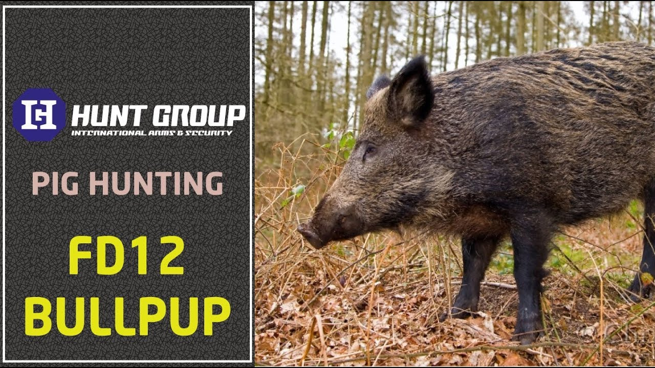 Fd12 Bullpup pig hunting. Attention! Violence and fear.