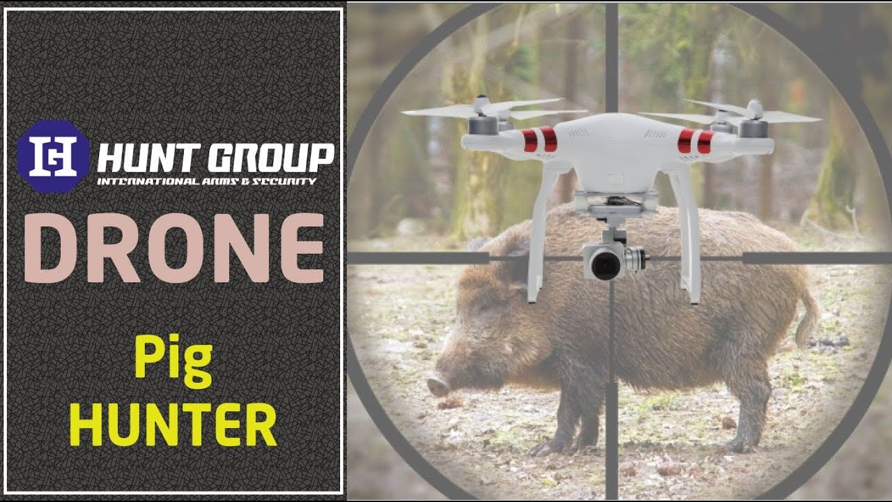 Pig hunting with drone